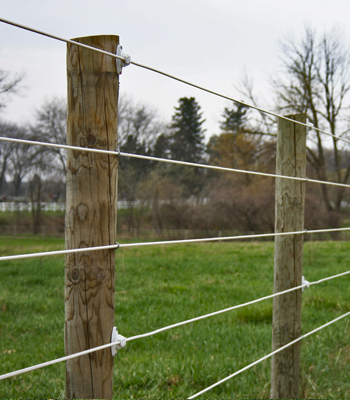 Coated Wire Fence