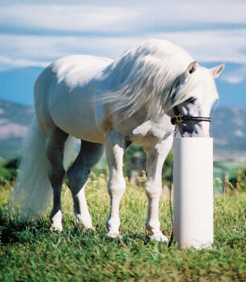 Heater And Automatic Horse Waterer Systems Equine And