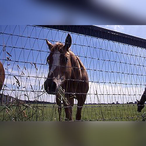 Diamond Wire Mesh Horse Fence | Woven Wire Fence | RAMM