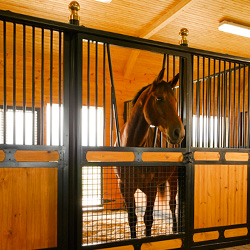 Designer Horse Stalls