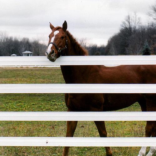 Per4mance Flex Fence 174 Ramm Horse Fencing Amp Stalls